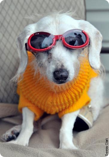 Самая старая собака в мире