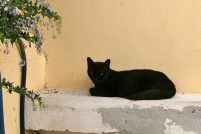 Критские кошки