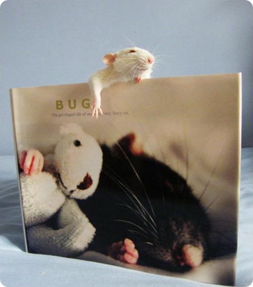 Джессика Флоренс и её крыска по имени Баг