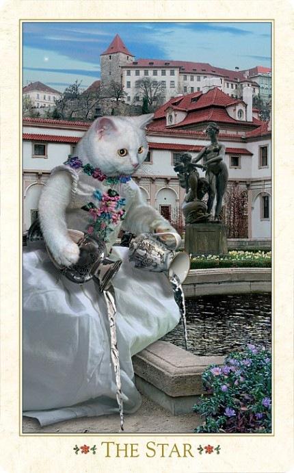 Кошачьи карты Таро