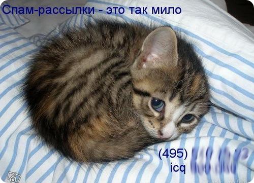 Спам котик