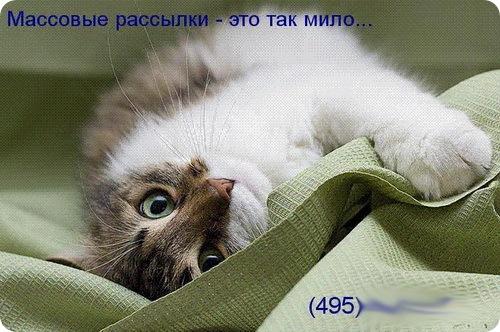 спам кошка