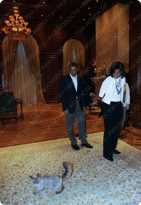 Кот президента - Дорофей