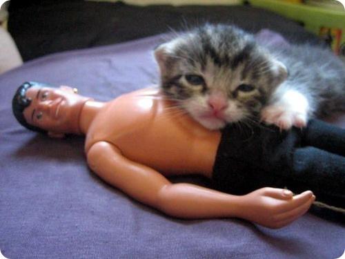 Кошки способны манипулировать людьми
