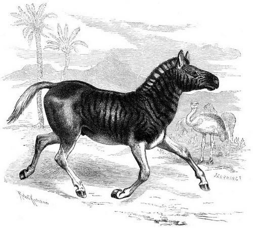 Зебра квагга