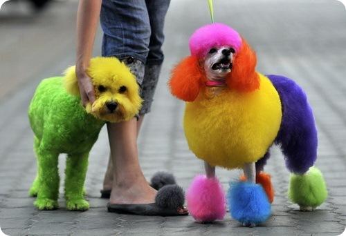 Цветные собаки
