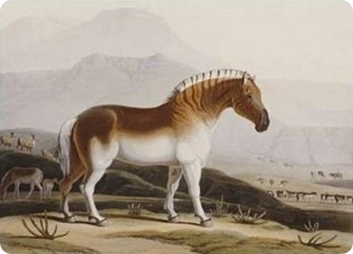 quagga  definition and meaning  Wordnik