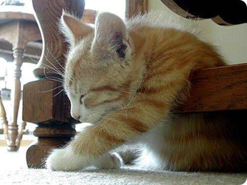 Как спит кошка