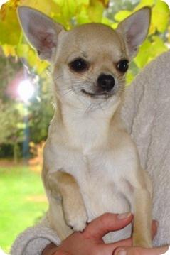 Портреты собак - Дорофеевой Татьяны