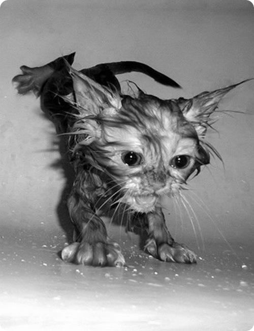 Мокрые киски