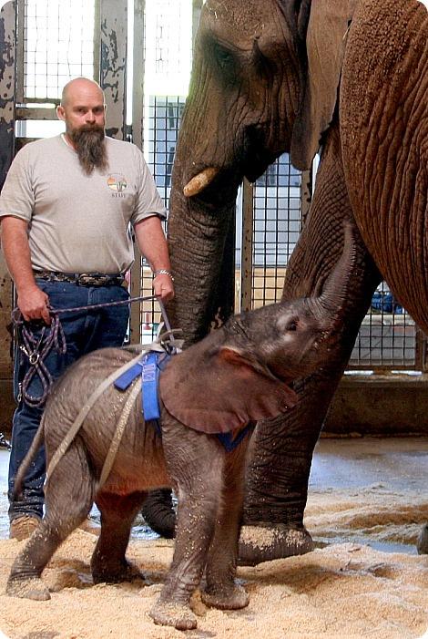 Здоровый малыш весом 114 кг!