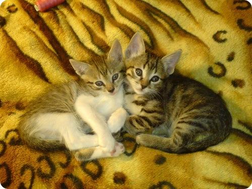 Кошки наших читателей
