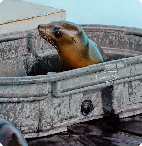 Бездомные тюленята