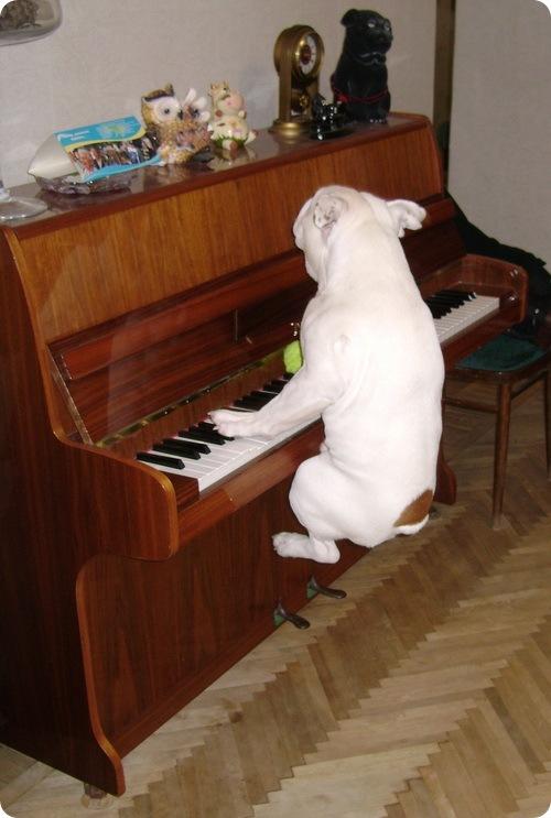Собаки наших читателей