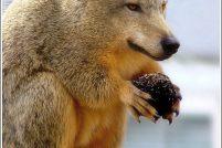 Подборка неведомых животных — 3