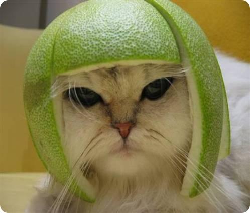 Костюм грейпфрутовой кошки