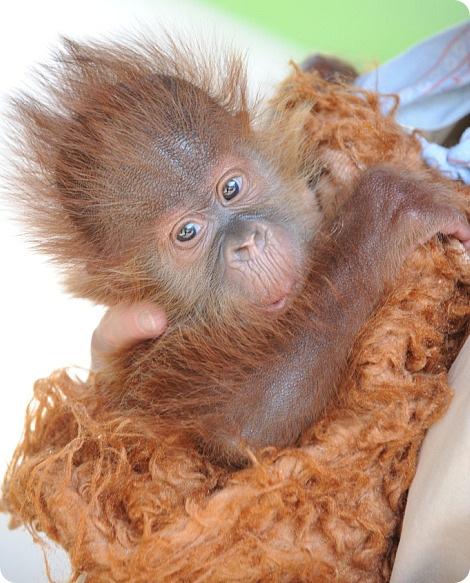 Визит к орангутангам