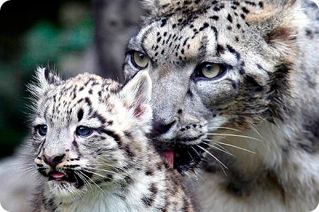 Самый крошечный детеныш зоопарка Токио