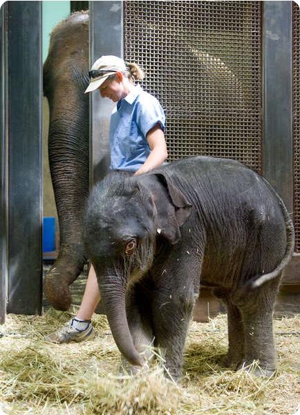Альбукерк радуется появлению на свет малыша-слоненка