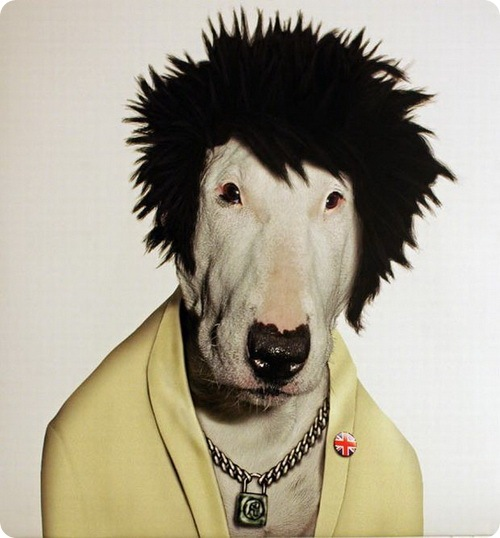 Животные рок-музыканты