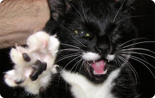 Пантера, которую видели в Люксембурге, оказалась кошкой