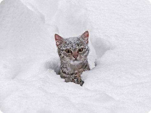 В Питере первый снег….