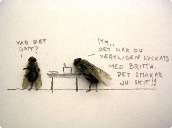 Из жизни мух...