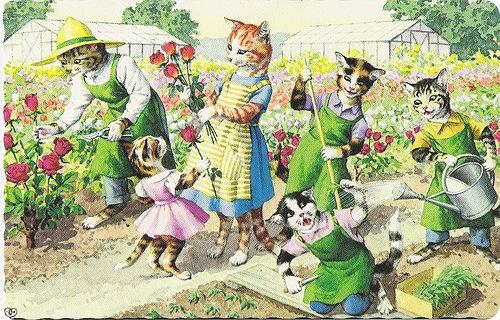 Кошки Alfred Mainzer