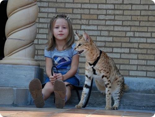 Самая высокая кошка в мире