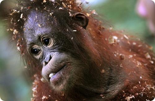На Борнео с чистой совестью