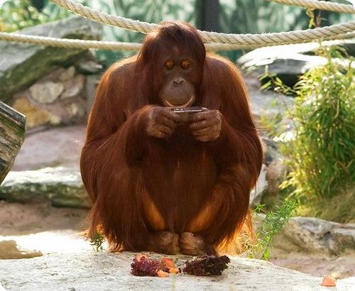 Орангутаниха блогер