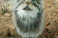 """""""Погладить кота"""" – вполне реально !"""