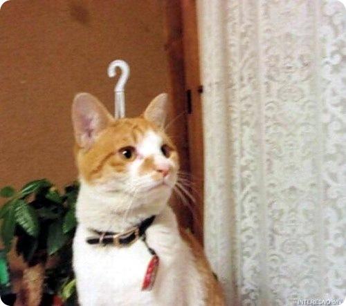 Что делают кошки, когда вас нет дома?