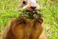 Cамые «болтливые» животные на Земле