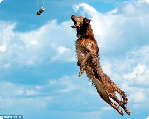 Самый дальний собачий прыжок