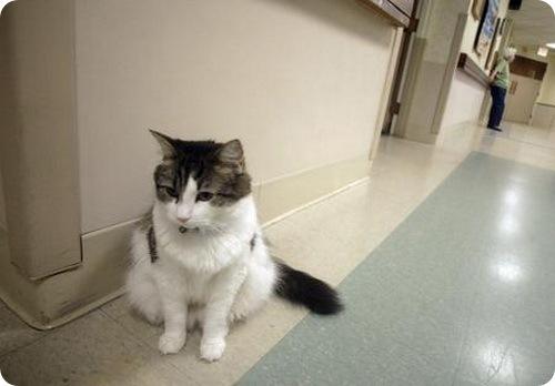 Кот научился «предсказывать» смерть