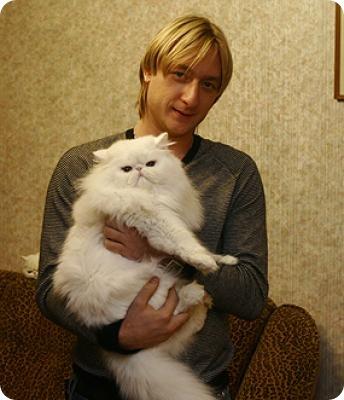Кошки знаменитостей