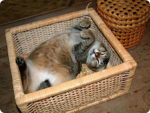Кошачий камуфляж