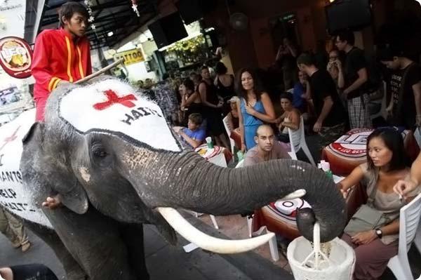 Слоны - сборщики пожертвований гаитянам
