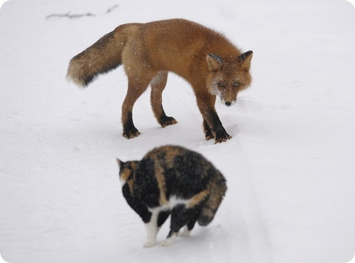 Игорь Шпиленок: Лиса и кошка