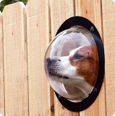 Иллюминатор для любопытных собак