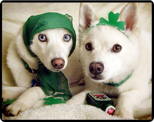 День Святого Патрика - Костюмы животных