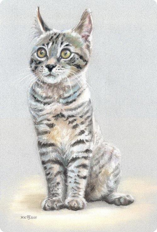 Кошки Гульшат Гильмановой