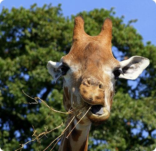 17 животных с необычными брачными ритуалами
