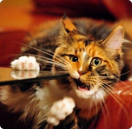 Молочные зубы у кошек