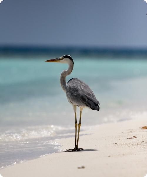 Животные Embudu Village - Мальдивы
