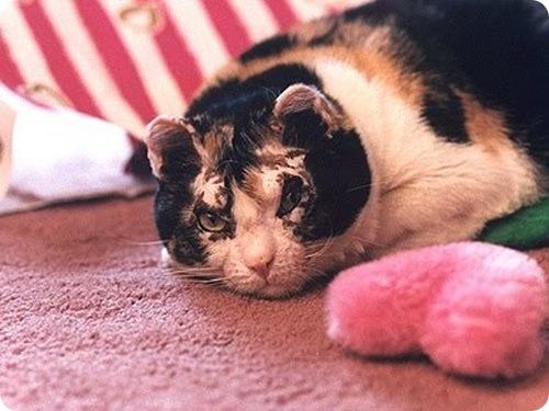 Отважная кошка Скарлетт.