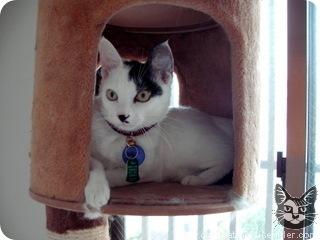 гитлер кошки