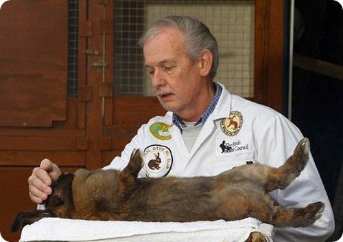 Заклинатель кроликов