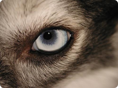 Десятка фактов о зрении у животных